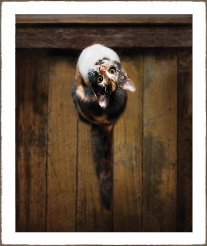 Lola the pussycat