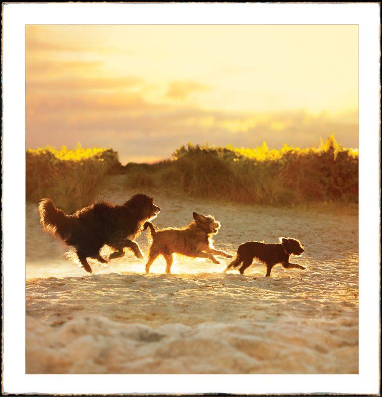 Three Dog Sunset